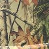 Осенний камуфляж